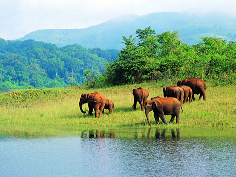 Backwaters & Wildlife